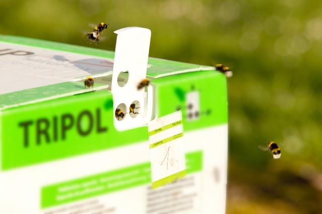 Die fleißigen Bienen vom Beller Hof