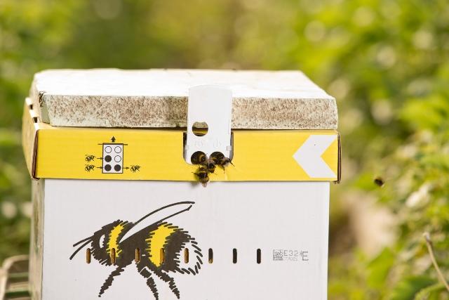 Bienen vom Beller Hof