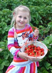 Erdbeeren vom Beller Hof