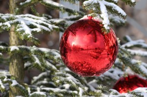 Beller Hof - Weihnachtsbäume vom Forsthaus Londorf