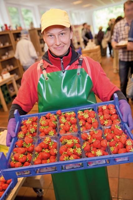 Die neue Erdbeer-Ernte vom Beller Hof
