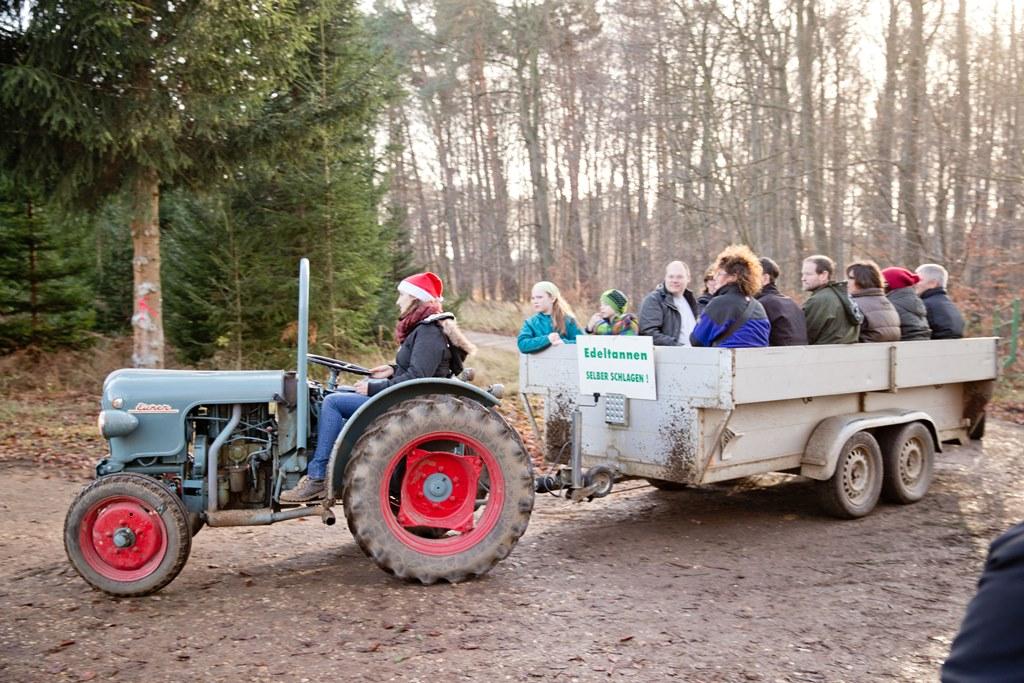 Weihnachtsbäume - Mit dem Traktor auf das Feld